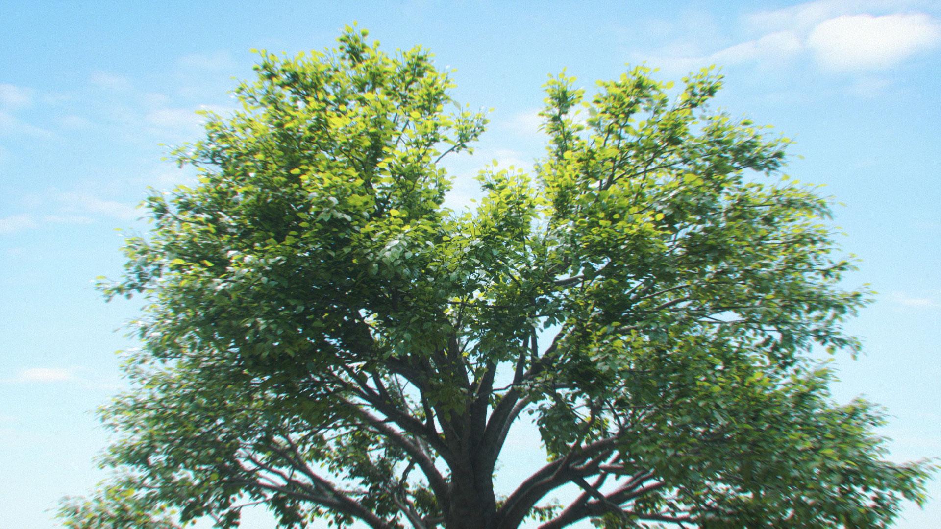 Tree_01_0002-0000000