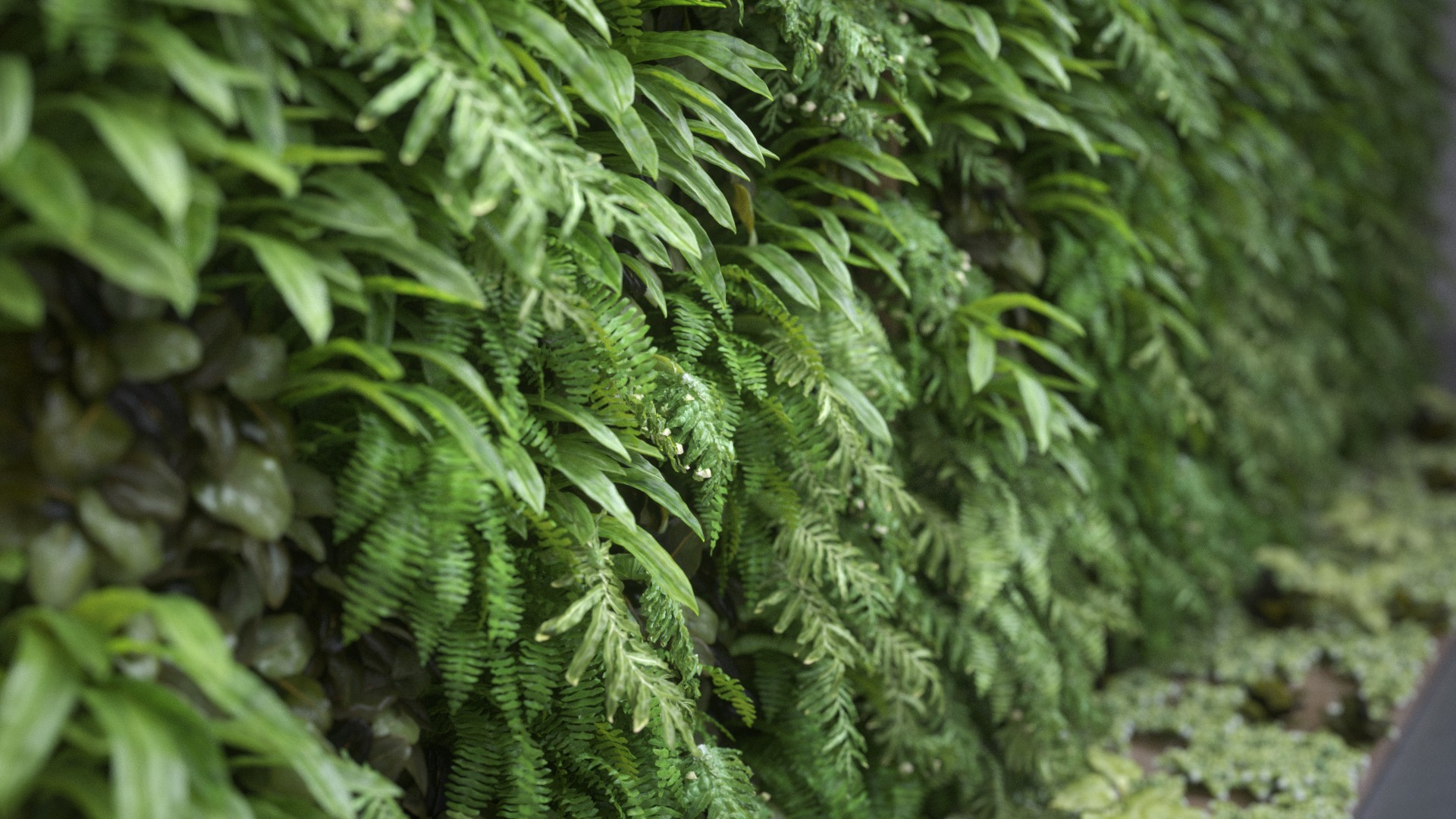 PR_AC_PlantWall_Development_Post_v0012